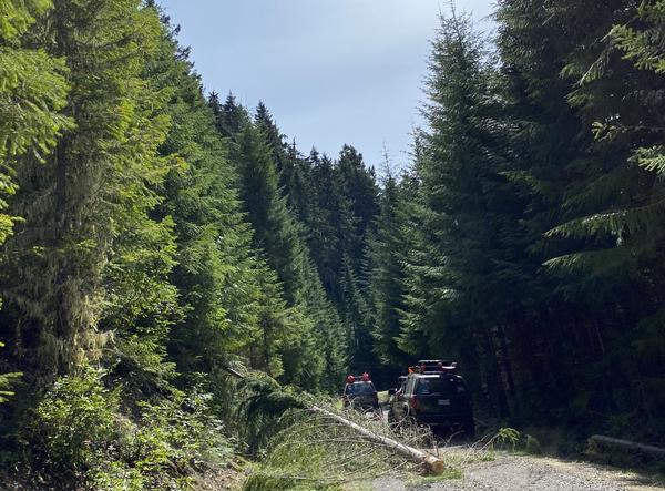 Down trees cleared from an off road trail using a winch.